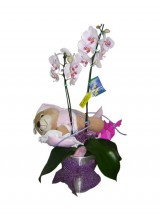 Orquídeas com pelúcia.