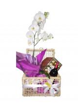 Cesta de Orquídea com chocolates