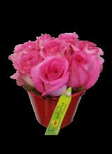 Balde com 06 rosas roséo